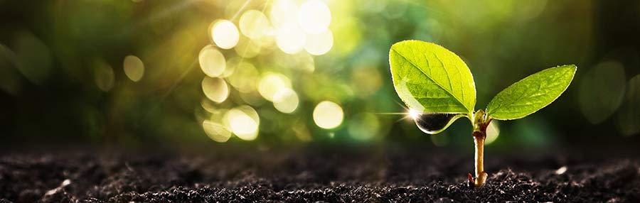 Your Faith Can Grow